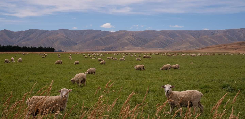 Что нужно знать о виноделии Новой Зеландии