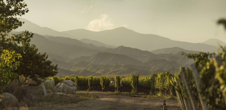 Виноделие Аргентины: от Сальты до Патагонии